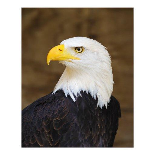 Haliaeetus americano Leucocephalus da águia americ Fotos