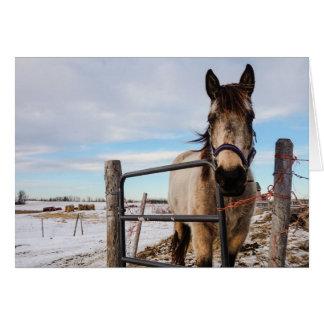 HAMbyWG - cartão - cercado no cavalo