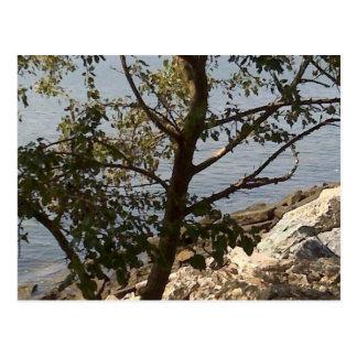 Hampton, opinião de baía de chesapeake do VA Cartão Postal