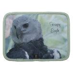 Harpy Eagle Agendas