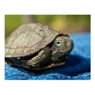 Hatchling da tartaruga no cartão da sarja de Nimes