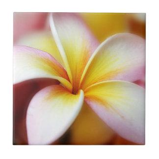 Hawaiian branco da flor de Havaí do Frangipani do Azulejo Quadrado Pequeno