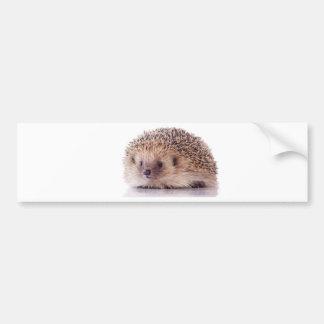 Hedgehog, Adesivo