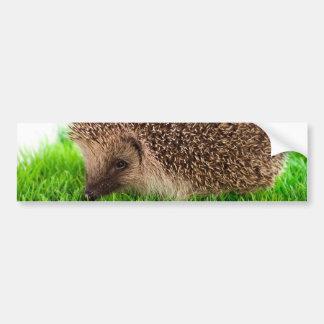 hedgehog adesivo para carro