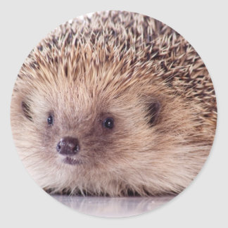 Hedgehog, Adesivos Redondos