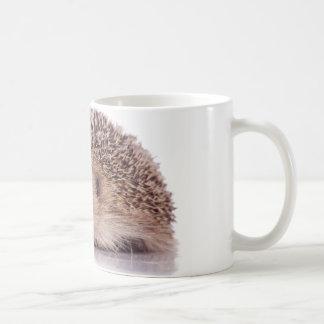 Hedgehog, Canecas