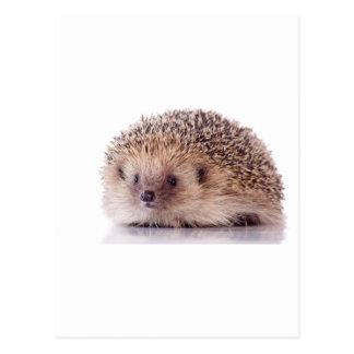 Hedgehog, Cartões Postais