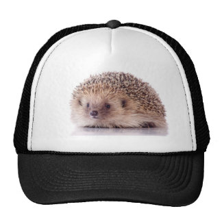 Hedgehog, Bones