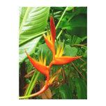 Heliconia havaiano impressão de canvas envolvida