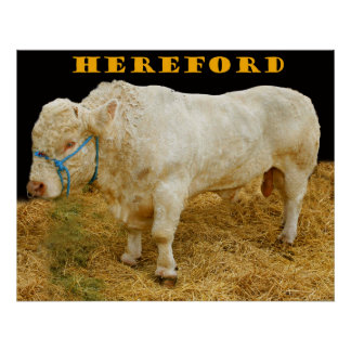 hereford pôster