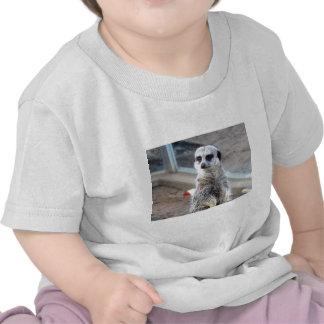 Hey quem você pensam sua vista? t-shirts