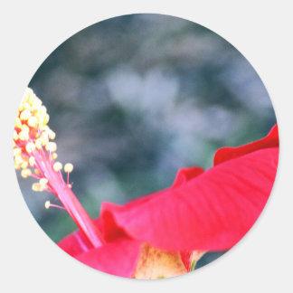 Hibiscus 4 adesivo