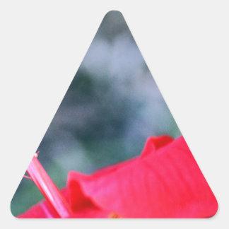 Hibiscus 4 adesivo triangular