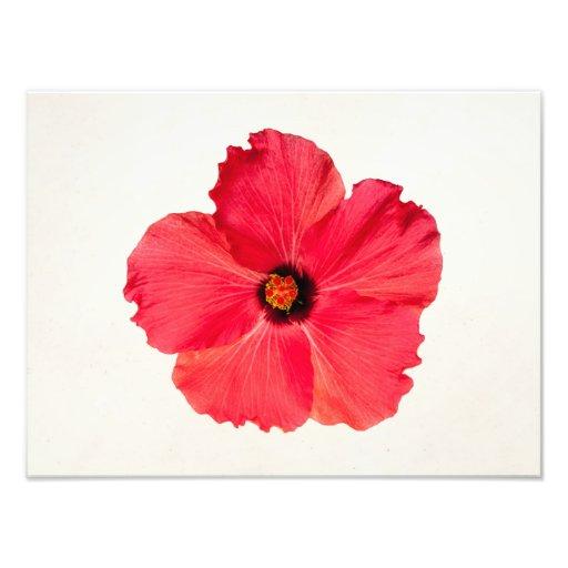 Hibiscus - flor tropical personalizada do rosa impressão fotográfica