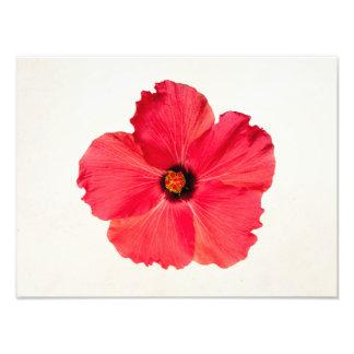 Hibiscus - flor tropical personalizada do rosa impressão de foto