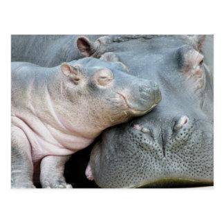 Hipopótamo Cartão Postal
