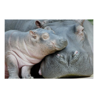 Hipopótamo Poster