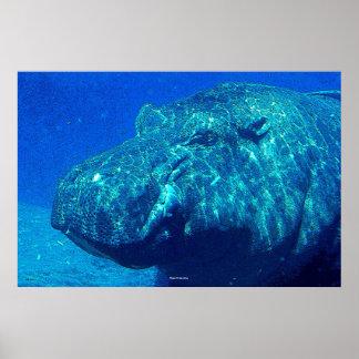 Hipopótamo subaquático poster