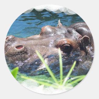 hippo-3 adesivo redondo