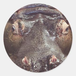 hippo-4068 adesivo