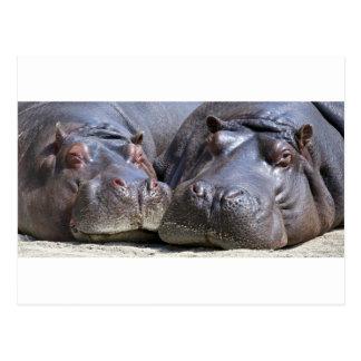 Hippo-78352 Cartão Postal
