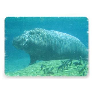 hippo-7