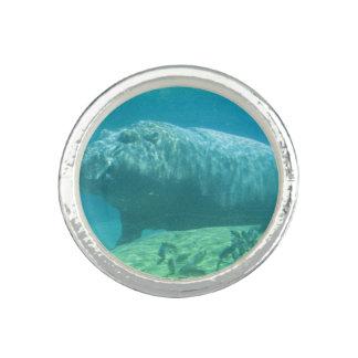 hippo-7 anéis com imagens