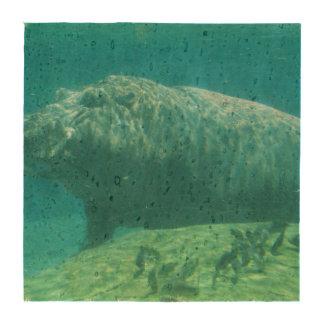 hippo-7 porta copo