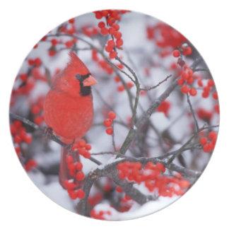 Homem cardinal do norte, inverno, IL Prato De Festa