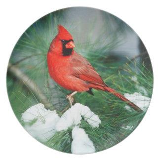 Homem cardinal do norte na árvore, IL Prato De Festa