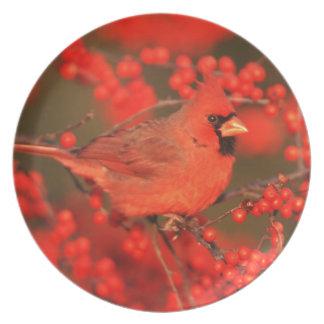 Homem cardinal do norte vermelho, IL Prato