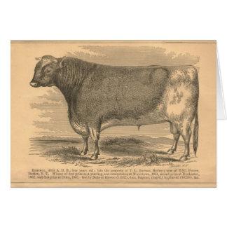 Hotspur, primeiro prêmio Bull em Utica, 1863 Cartao