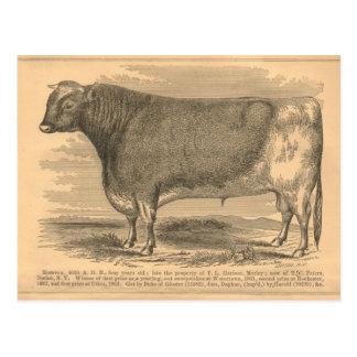 Hotspur, primeiro prêmio Bull em Utica, 1863 Cartões Postais
