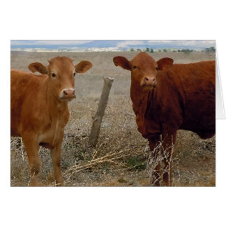 Humor da festa de aniversário do gado cartão comemorativo