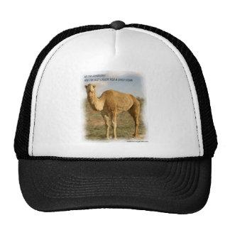 Humphrey o camelo de Humpless Bonés