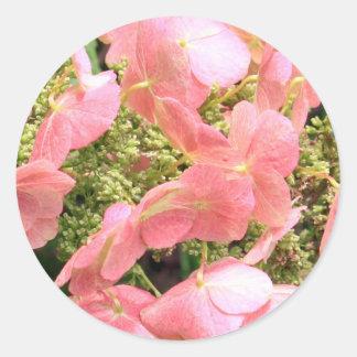 Hydrangea cor-de-rosa adesivo