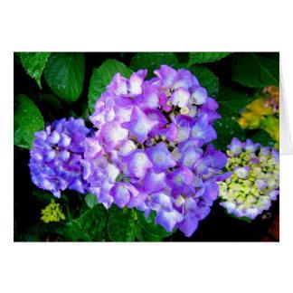 Hydrangea do verão cartão comemorativo