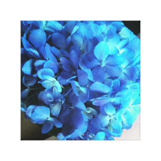 Hydrangea lindo impressão em tela