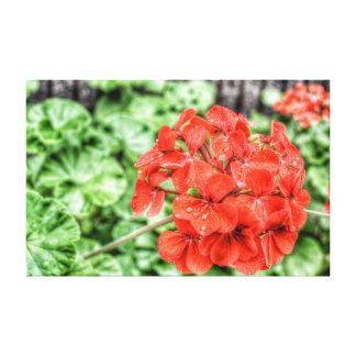 Hydrangea vermelho impressão de canvas envolvida