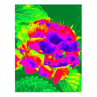 Hydrangeas 1 cartão postal
