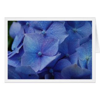 Hydrangeas Cartão Comemorativo