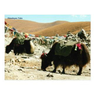 Iaques Himalaias do cartão