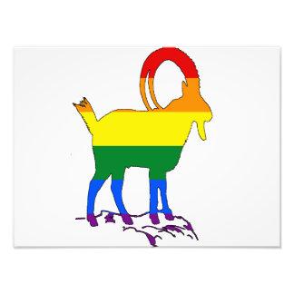 Íbex do arco-íris impressão de foto