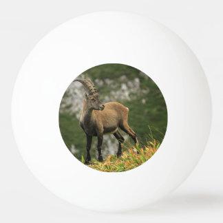 Íbex selvagem alpino, da cabra, ou steinbock bolinha pingpong