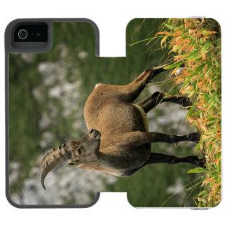 Íbex selvagem alpino, da cabra, ou steinbock capa carteira incipio watson™ para iPhone 5