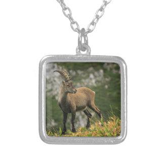 Íbex selvagem alpino, da cabra, ou steinbock colar banhado a prata
