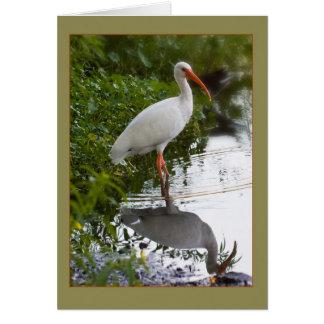 Íbis brancos no cartão da lagoa
