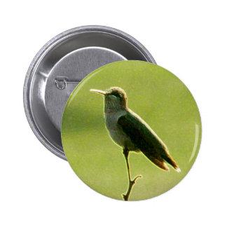 Ícone do colibri botons