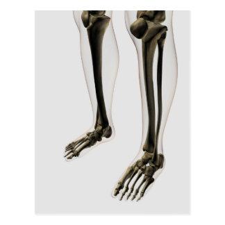 Ideia tridimensional do pé e dos pés humanos cartões postais