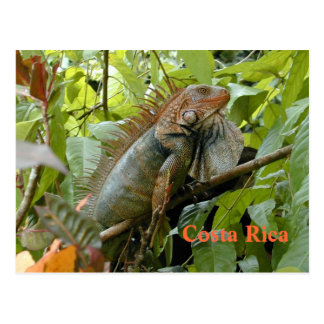 Iguana Costa Rica do cartão
